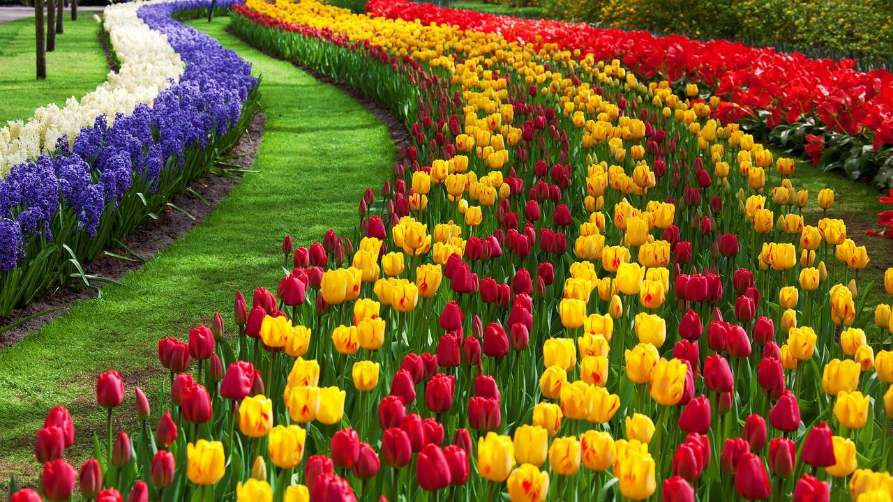 Парад цветов в Нидерландах. Тур: Поезд + автобус. Голландия - Бельгия - Германия
